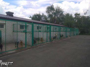 Pif Donetsk