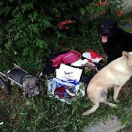 Spenden für Tierklinik Kiew ♥