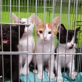 300 Katzen im Katzenheim Kiew bitten um Hilfe !!!