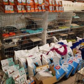 Große Weihnachtsübergabe für Katzenheim Kiew♥