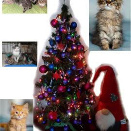 867€ für das Katzenheim Kiew, bei unserer Weihnachtsaktion ♥