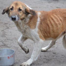 Weihnachts-Spendenaktion für Tiere in der Ostukraine, von unserem Partner ETN ♥