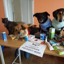 Sachspenden von PAWU für die Tierklinik in Zhovty Wody sind angekommen ♥