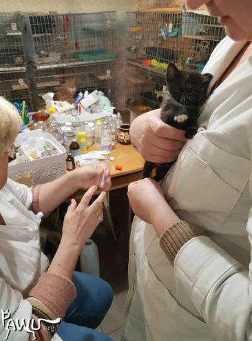 abgebranntes Tierheim Kiew