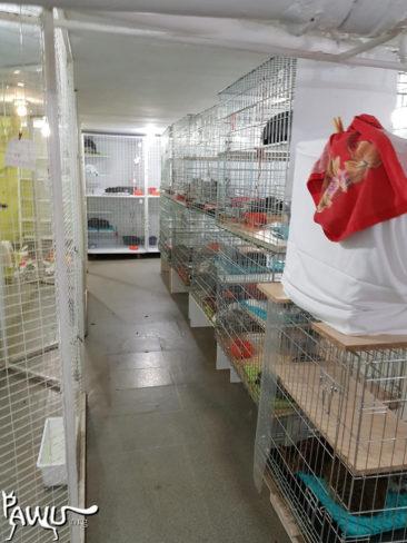 Übergabe Oster - Aktion Katzenheim Kiew ♥