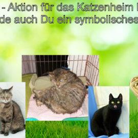 Osteraktion für das Katzenheim Kiew ♥