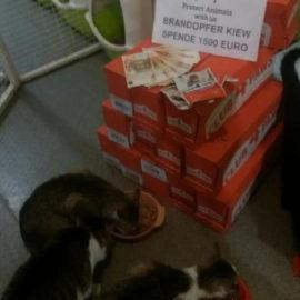 Übergabe an Brandopfer im Katzenheim Kiew ♥